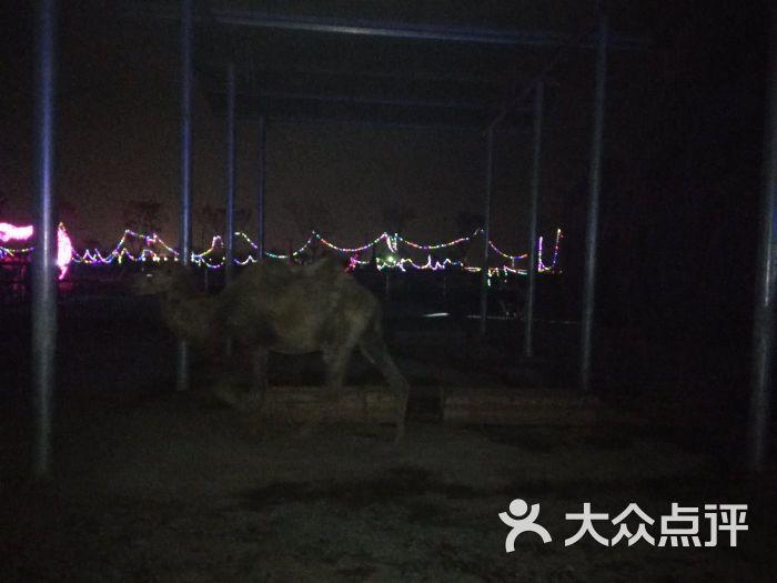台州湾野生动物园图片 - 第3张