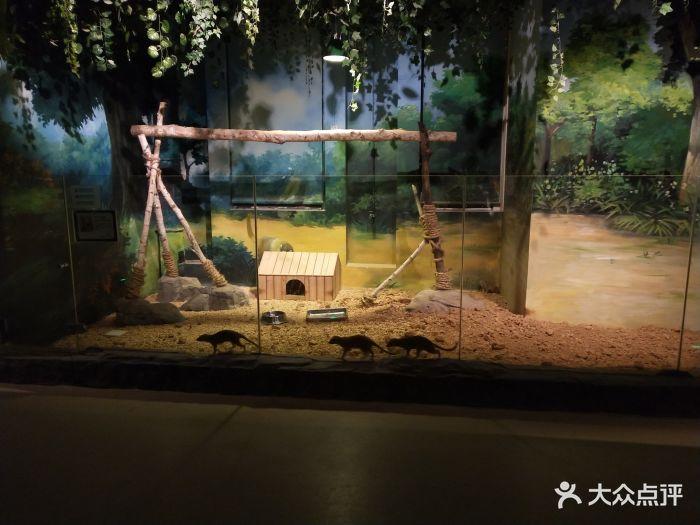 嗒咪动物奇幻乐园(杭州店)图片 - 第225张