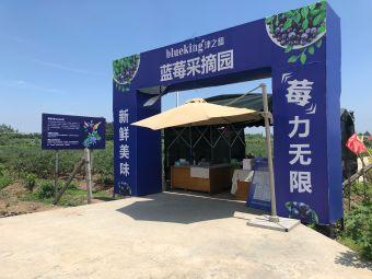 津之蓝农庄蓝莓园区