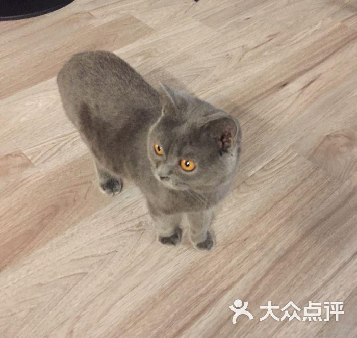 贝斯特宠物猫咪咖啡馆图片 - 第4张