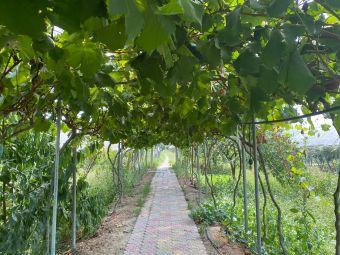 游龙葡萄庄园
