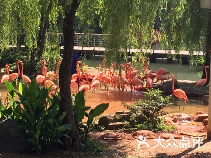 武汉动物园景点图片 - 第118张