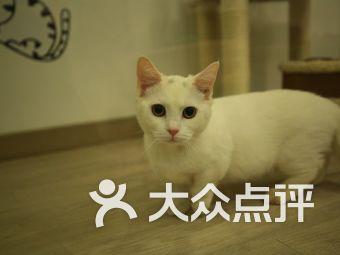 Miku pet 米酷宠物