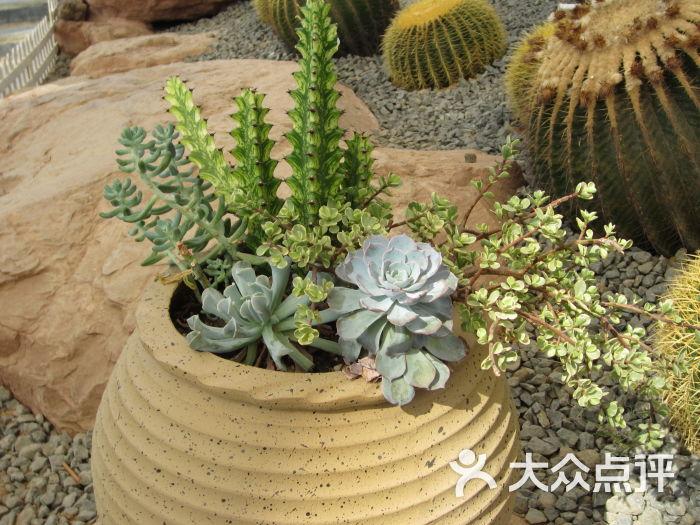 大阳山植物园-多肉图片-苏州景点-大众点评网