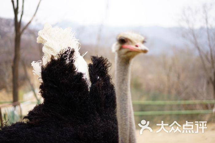 八达岭野生动物园图片 - 第15张
