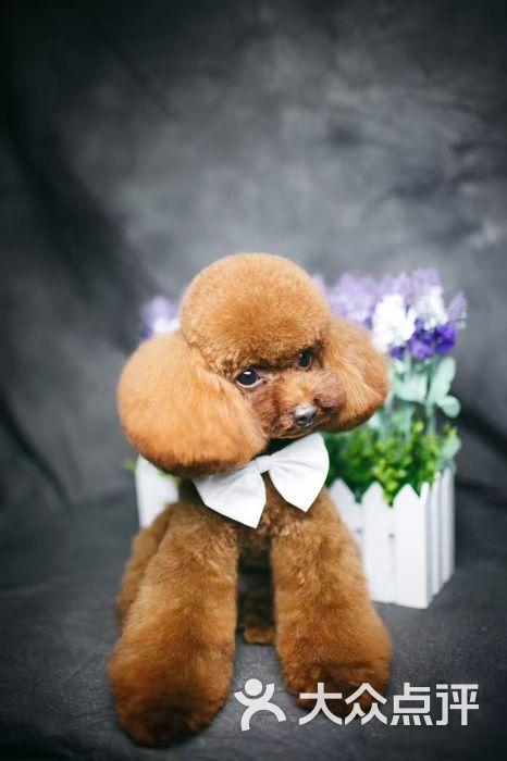 美西宠美宠物美容店图片 - 第50张图片