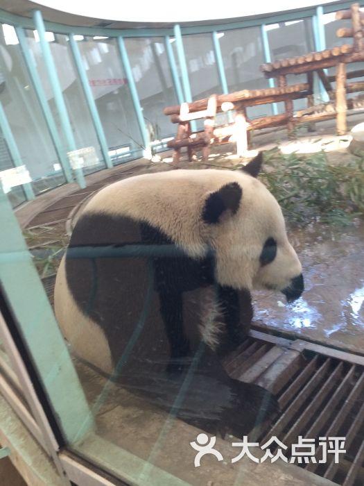 天津动物园的全部评价(第3页)-天津-大众点评网