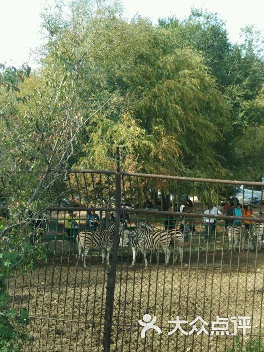 八达岭野生动物园的全部评价-延庆区-大众点评网