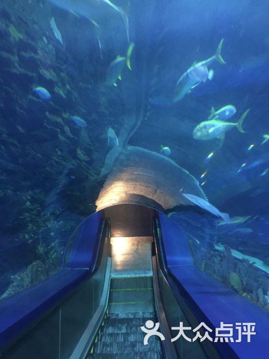 北京海洋馆-微信ss41075266的相册-北京景点-第2页