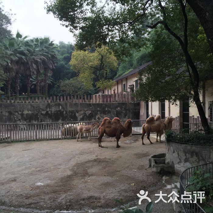 重庆动物园景点图片 - 第136张
