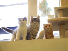 猫儿山·猫主题休闲餐厅的图片