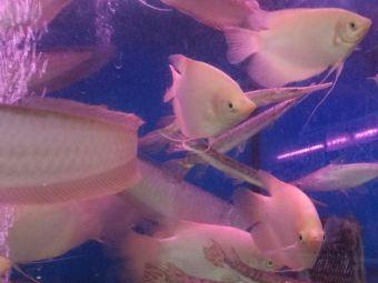 精灵鱼水族馆