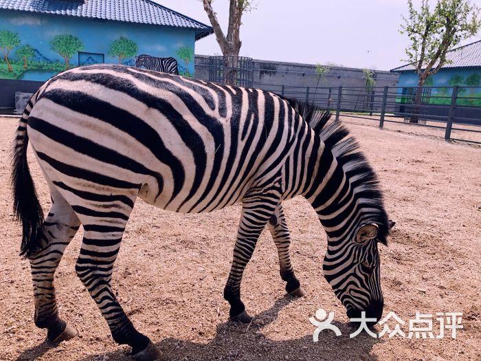 龙口动植物园-图片-龙口市周边游-大众点评网