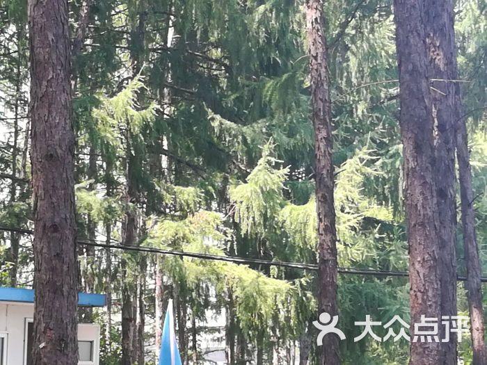 龙凤山国家森林公园图片 - 第23张