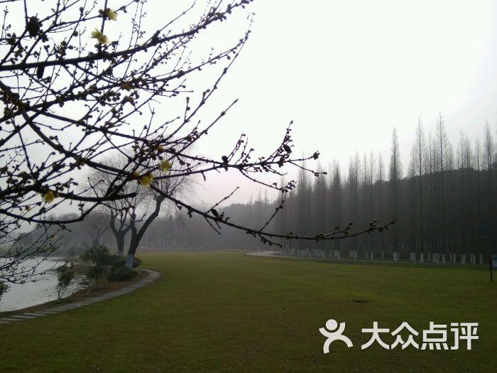 龙背山森林公园图片 - 第2张