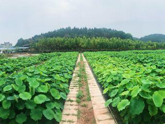 施家湾生态农庄