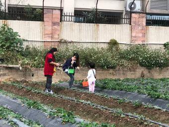 源生态草莓园