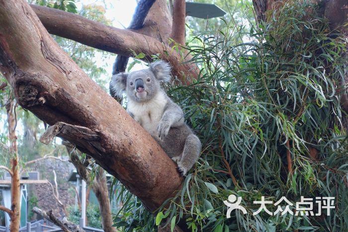 塔龙加动物园图片 - 第1张