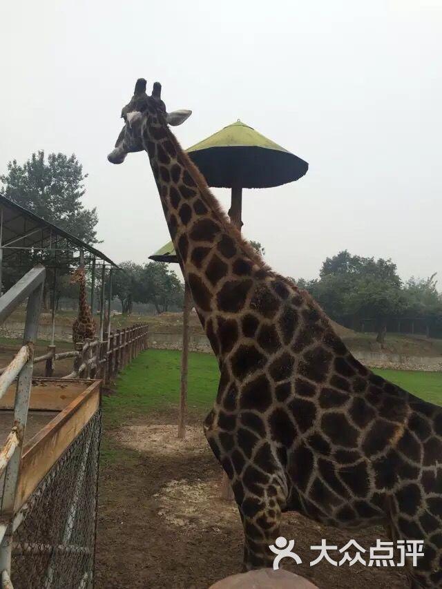 秦岭野生动物园-图片-西安景点-大众点评网
