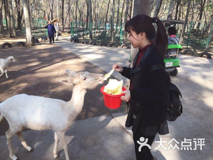 北京野生动物园-图片-北京周边游-大众点评网