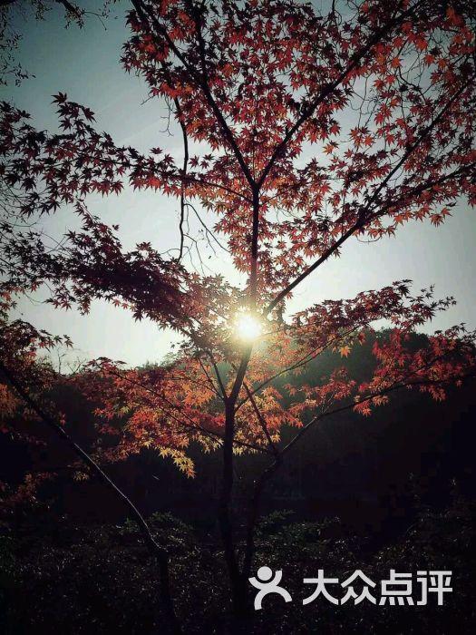 栖霞山名胜风景区图片 - 第3066张