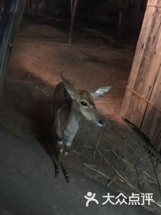 清迈夜间动物园图片 - 第4张