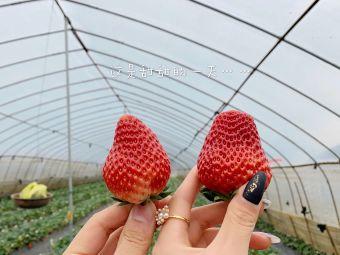 陈康自采草莓园