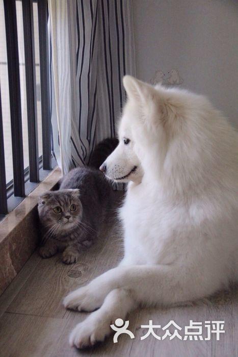 大海解说猫