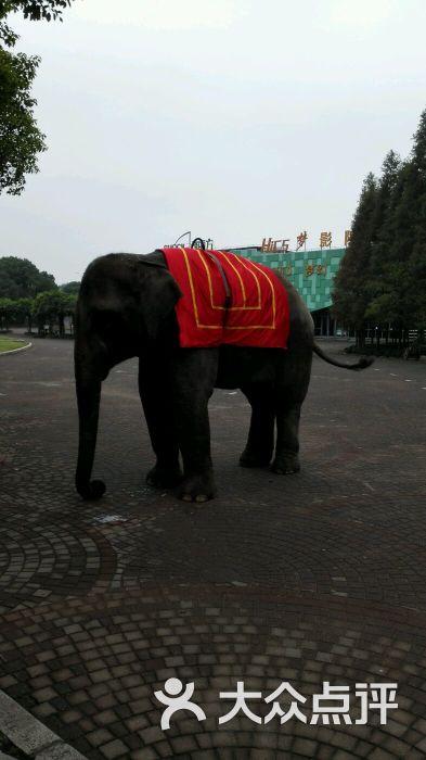 上海野生动物园图片 - 第23张