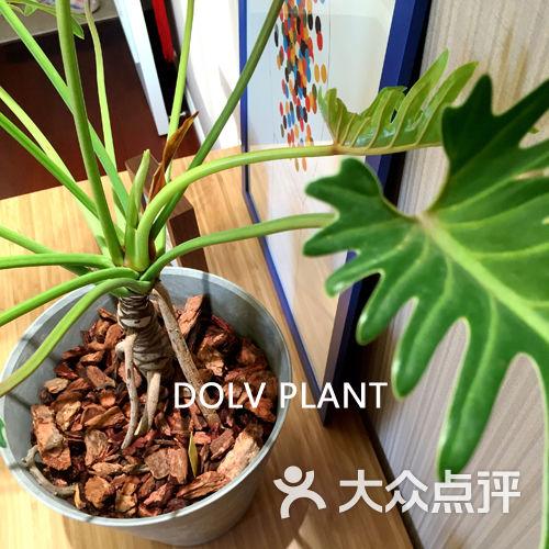 盆景 盆栽 植物 500_500