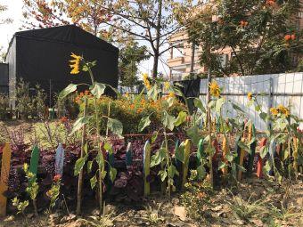 霞石社区花园