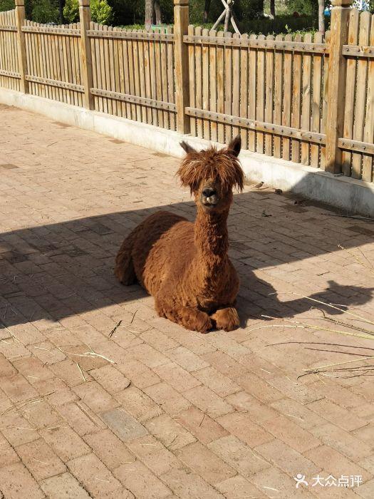 大青山野生动物园图片 - 第32张