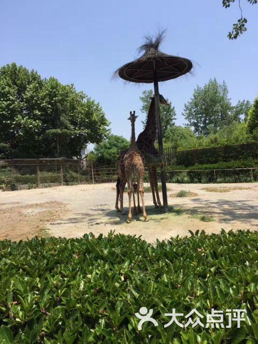 上海动物园图片 - 第891张