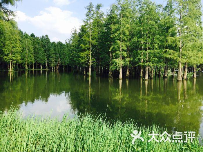 青西郊野公园水上森林图片 - 第5张