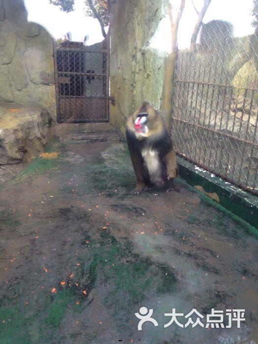 温州动物园图片 - 第259张