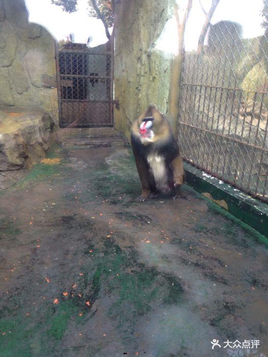 温州动物园图片 - 第369张