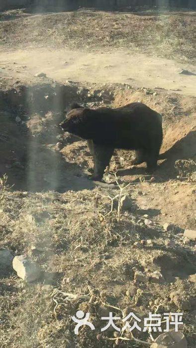 八达岭野生动物园图片 - 第3张