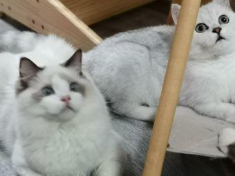 猫小姐猫咖(海盐嘉凯城店)