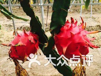 西山火龙果采摘园