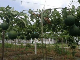 慷藤生态农业