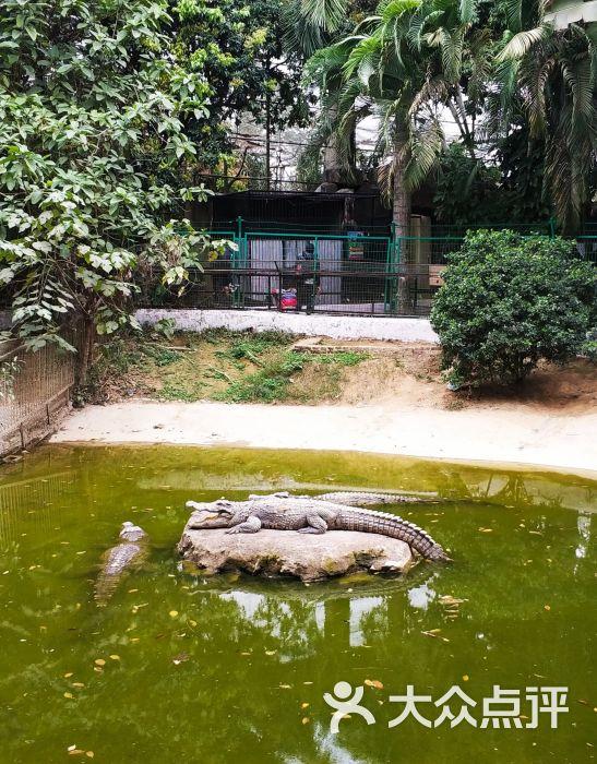 西双版纳热带动物园图片 - 第16张