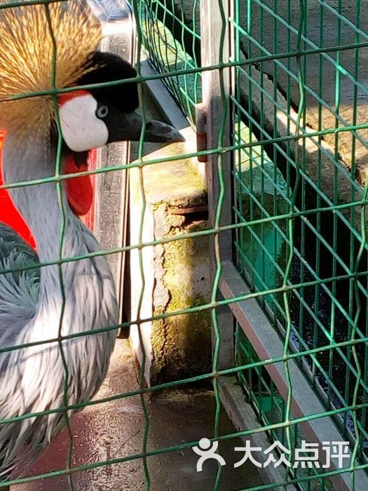 东莞寮步香市动物园图片 - 第149张