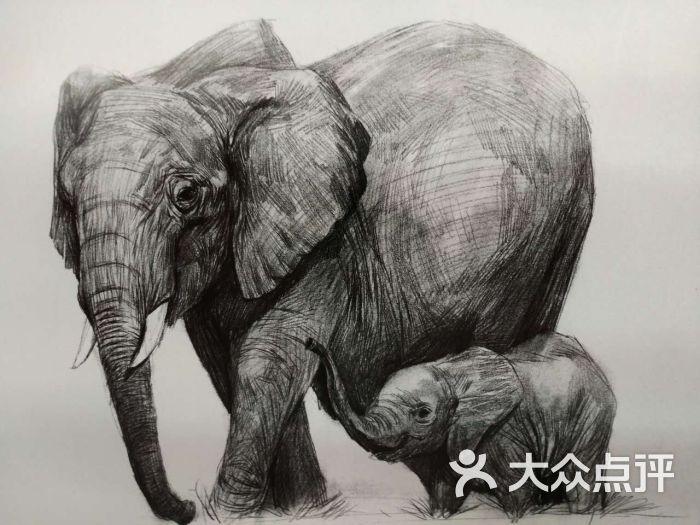 壁纸 大象 动物 犀牛 野生动物 700_525