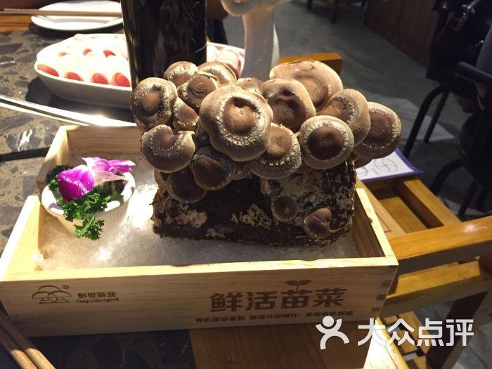 巴实上海老图片(都市路龙盛火锅店)-广场-重庆土家族有的哪些美食图片