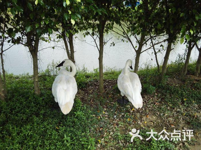 海口天鹅湖动物乐园图片 - 第8张