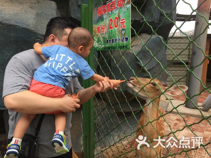 朝阳公园亲子动物园图片 - 第1张