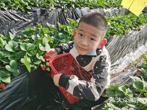 老王生态草莓采摘园