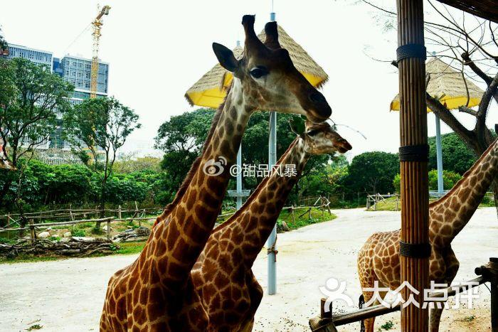 深圳野生动物园图片 - 第1411张