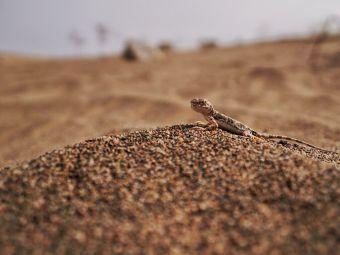 敦煌戈壁荒漠研究站观测场