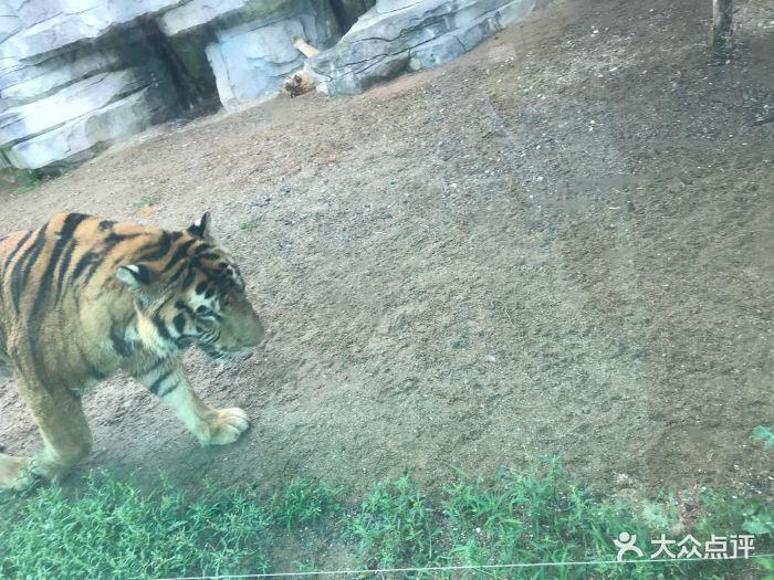 台州湾野生动物园图片 - 第2张
